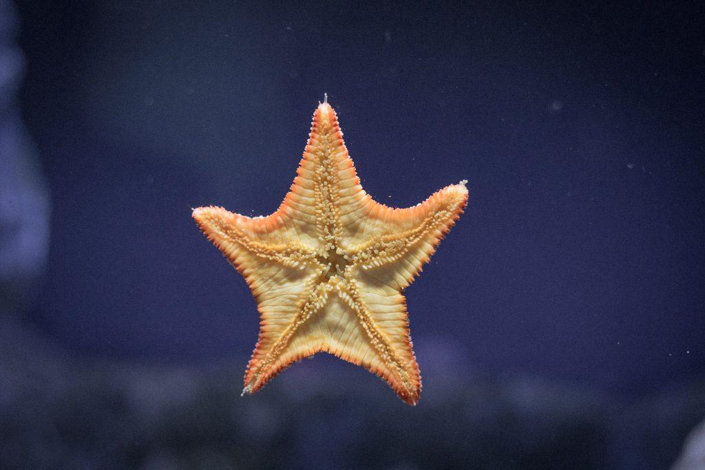 starのイメージ
