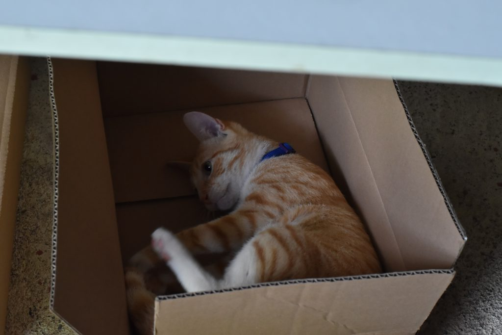 boxのイメージ